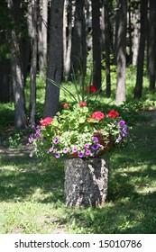 Flowering Plant in Woods