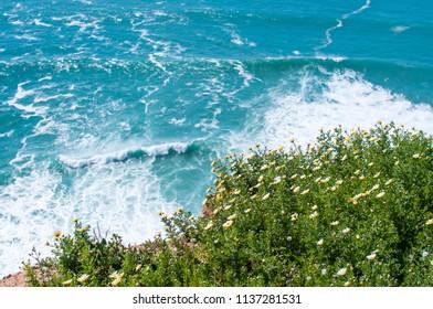 Flowering plants against the background of ocean waves. Portugal