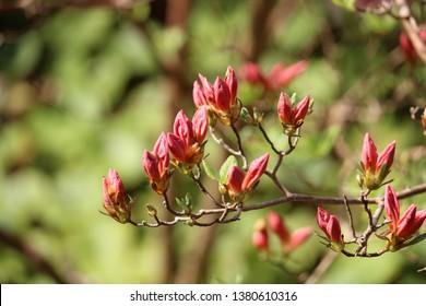 Flowering Plants on the Isle of Arran - Scotland