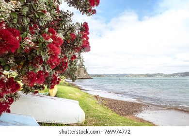 Flowering red Pohutukawa is known as the New Zealand Christmas tree, flowers in summer at beach and coast. Photographed in Russell, Bay of Islands, Far North District, Northland, NZ