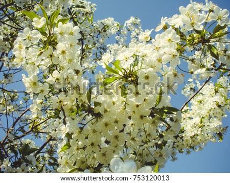 Flowering Spring Trees Flowers Home Garden Stock Photo Edit Now