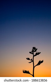 Flowering stem of a plant in silhouette with a cloudless sunset and colorful gradient