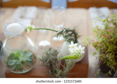 Flowering succulent at wedding reception