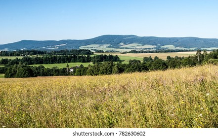 flowering summer meadow, countryside with forestst, meadows, fields and few small villages and hills of Orlicke hory mountains on the background near Prostredni Lipka village in Czech republic