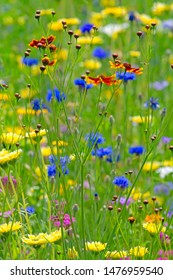 Flowering summer meadow with shallow depth of field and selective focus