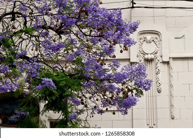 Flowering tree and colonial building in Salta, Argentina
