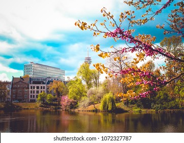Flowering trees and a pond in a park in Dusseldorf, Germany