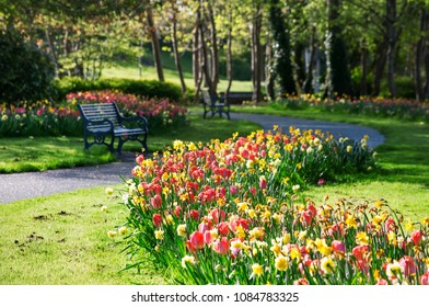 Flowering tulips and daffodils in the city parks of Dublin