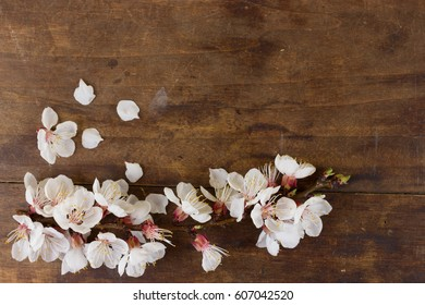 Flowering twig of plum tree on wooden background. Space for text