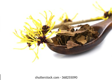 flowering witch hazel (Hamamelis) and a wooden spoon with dried leaves for  homemade herbal cosmetics, isolated with shadow on a white background, close up with selected focus, narrow depth of field
