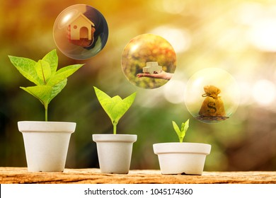 Flowerpot bank of money and seed plant growing value with savings for investment put on the old wood and bubbles for business dreams with plan as loan and buy home and car in the future concept.
