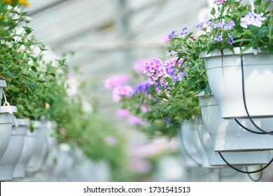 flowerpot in garden center and glass house