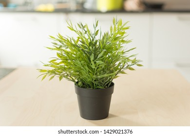 Flowerpot on the table. Green plant in a black flowerpot on a wooden table.
