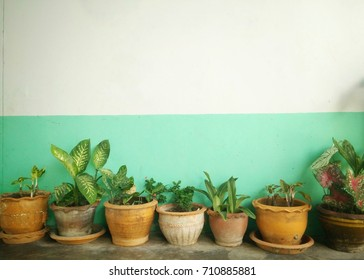 flowerpot with white wall for texture