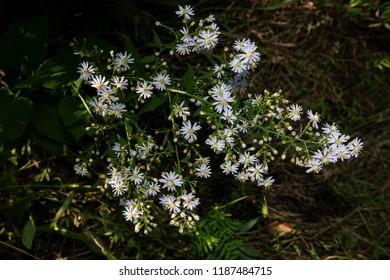 Flowers in Québec