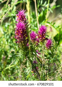 Flowers. - Shutterstock ID 670829101