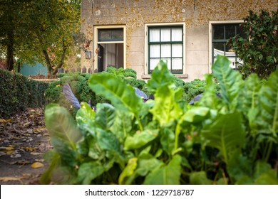 Flowers, agricultural products and fruit are grown in a traditional vegetable garden.