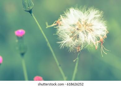 Flowers along the grass