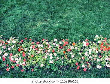 flowers among empty lawn