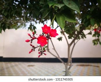 Flowers of Andalusia Park in Jubail Industrial City, Saudi Arabia
