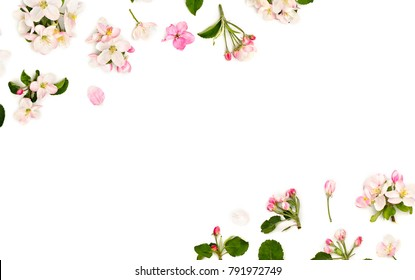 Flowers apple tree on a white background with space for text. Top view, flat lay