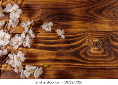 Flowers of apricot tree on wooden background. Spring blossom on wood desk. Top view, copy space