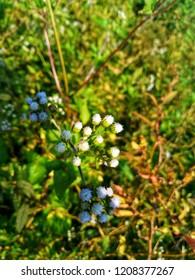 Flowers areare beautiful