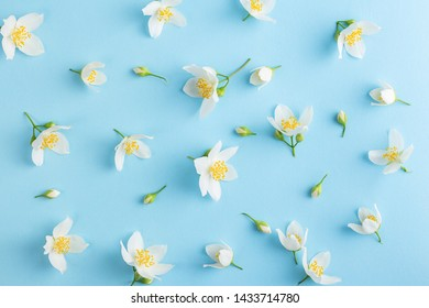 Flowers arranged in pattern of sweet mock orange blossoms and offspring on a light blue background. Seen from above as a flat lay design.