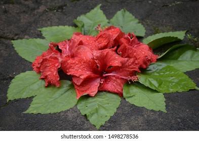 Thiruvonam Images, Stock Photos & Vectors   Shutterstock
