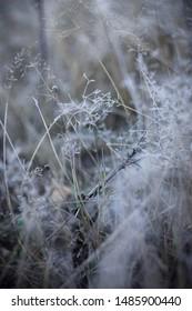 Flowers from the autumn garden - Shutterstock ID 1485900440