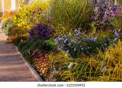 Flowers in the autumn garden. Flowering perennials in the garden or Park