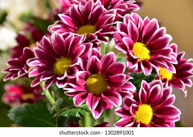 Flowers awaken a good mood and a feeling of contact with the beautiful because they are perfection itself. - Shutterstock ID 1302891001