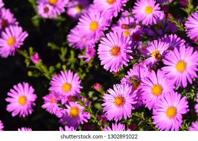 Flowers awaken a good mood and a feeling of contact with the beautiful because they are perfection itself. - Shutterstock ID 1302891022