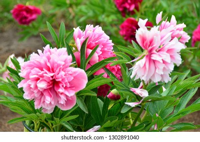Flowers awaken a good mood and a feeling of contact with the beautiful because they are perfection itself. - Shutterstock ID 1302891040