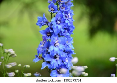 Flowers awaken a good mood and a feeling of contact with the beautiful because they are perfection itself. - Shutterstock ID 1302893761