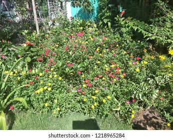 Flowers in Bach Cuc Homestay, Long Hai Beach, Ba Ria Vung Tau, Vietnam
