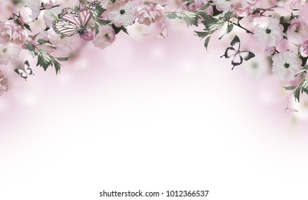 Flowers background with amazing spring sakura with butterflies. Flowers of cherries.