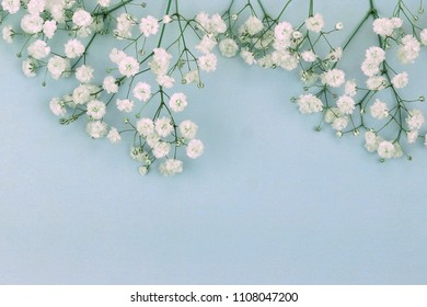 Flowers background. bouquets of a white gypsophila flower on a pale blue background. top view. copy space. Holiday concept