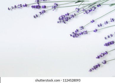 Flowers background. Frame pattern of lavender flowers on pale blue background. top view. copy space