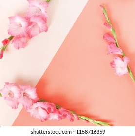 Flowers background.Bouquet of pink gladioluses on beige pink pastel colors paper geometric background. Pattern of gladioli,  holiday greeting card. Minimal concept. Flat lay, Top view. Copy space