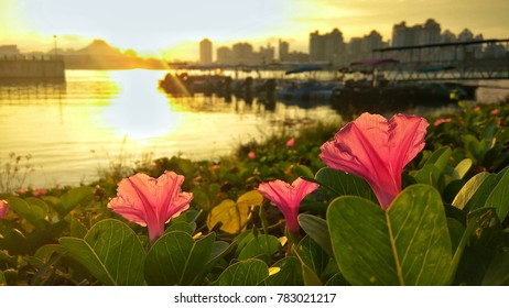 Flowers at the bank of the reservoir with morning scenery at the background