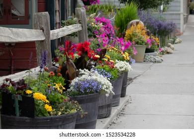 Flowers in barrels along the sidewalk in Coupeville, Washington