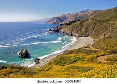 Flowers and beach at Big sur