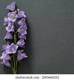 Flowers bells are on dark paper, postcard