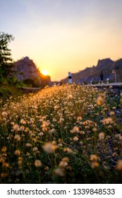 Flowers beside the road in sunset sky