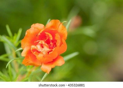 Flowers and blank background Soft focus