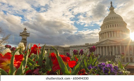 Flowers bloom in a flowerbed on the east side of the United States Capitol Building in D.C.