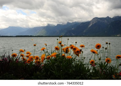 flowers in bloom at the lakeside of Lake Leman, Swiss