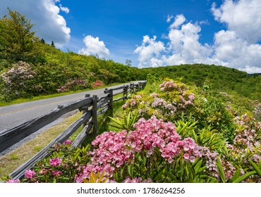 Flowers blooming along Blue Ridge Parkway. Summer mountain  scenery. Beautiful road in the nountains.Near Asheville, North Carolina, USA.
