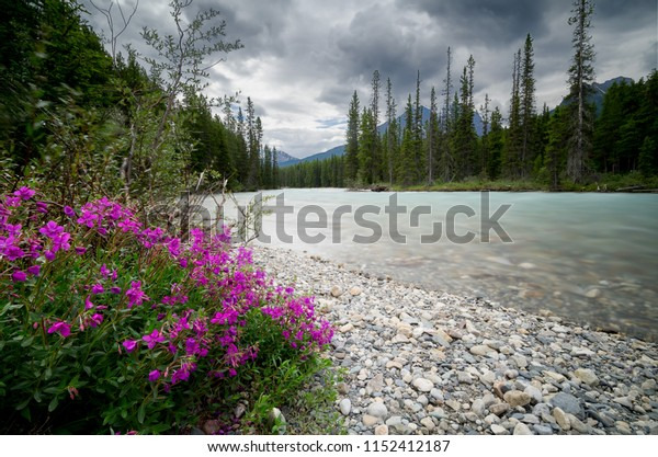 Flowers blooming next to the river in the mountains.